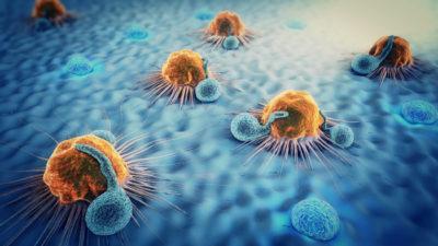 Den Immunzellen auf der Spur